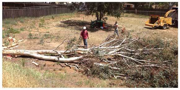 Tree Removal San Diego