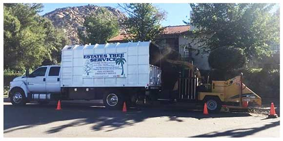 Commercial Tree Service Company