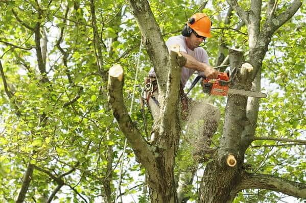 When is the right time for Tree Pruning in San Diego?