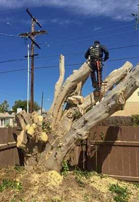 Stump Grinding San Diego